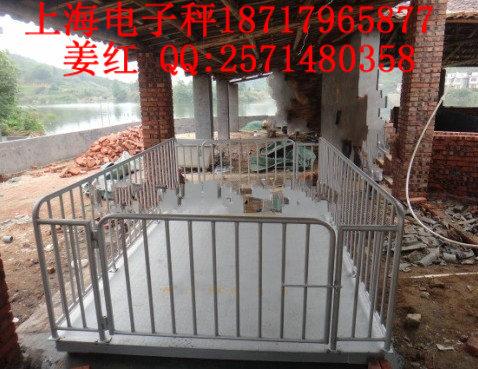 养猪场专用电子秤