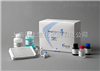 96T/48T人解整合素样金属蛋白酶9(ADAM9)检测ELISA试剂盒